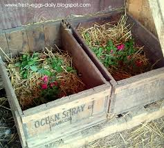 chickens love herbs in their nest boxes