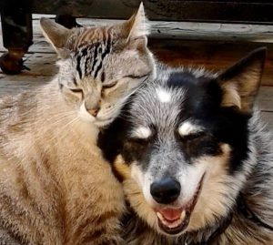 Cats and dogs love holistic medicine!